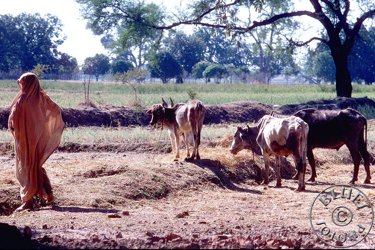Kerala, scène de vie paysanne