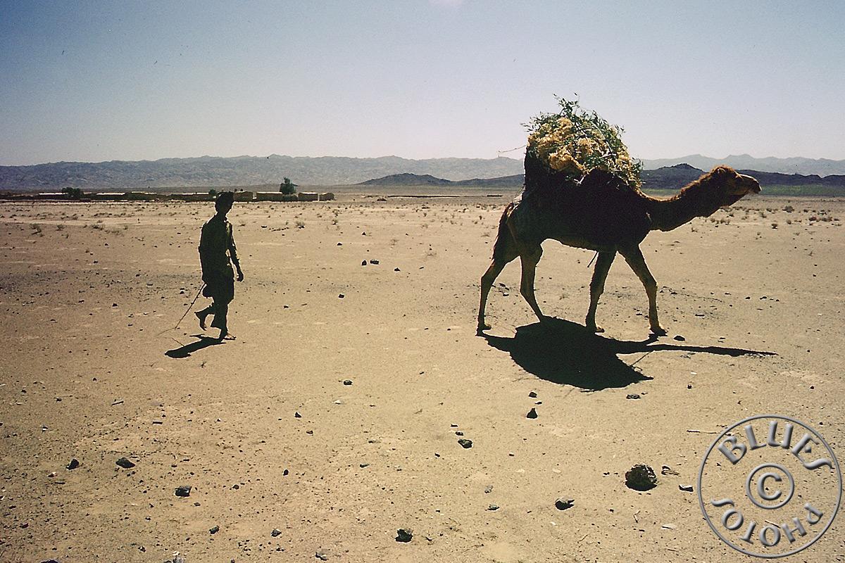 Pakistan, chameau rencontré sur la piste